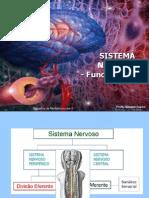 Sistema Nervoso Funcionalidade