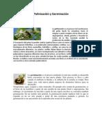 Polinización y Germinación