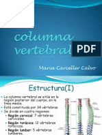 La Columna Vertebral (2)