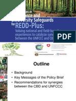 La Vina- Best Practices in Governance and Biodiversity Safeguards for REDD-Plus