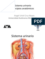 Anatomia Sistema Urinario