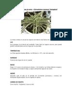 Instrucciones Para Plantas de Interior