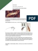 Tema 5- 1 Resumen Insecta