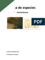 Ficha de Especies Botanica