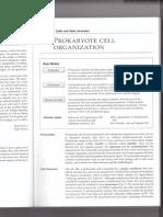 CelulasProc_Eucariotas