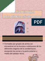 IIGlándulas Palatinas
