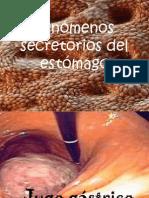 Fenómenos secretorios del estómago.ppt
