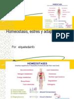 Homeostasis, estres y adaptacion