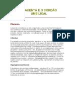 A Placenta e o Cord o Umbilical x