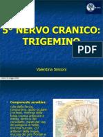 Il Nervo Trigemino