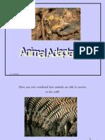 Animal Adaptations PPT