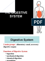 Anat Lec12 - Digestive Sys