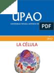 Celular Procariota y Eucariota