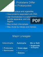 Viruses, Protists Part III)