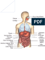 Sistema endocrino, - urinario  - nervoso