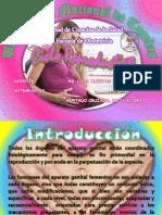 Ciclo Hormanal Ovarico - Ciclo Menstrual Uterino