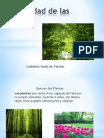 Diversidad de Las Plantas Karla Ochoa Nuevo