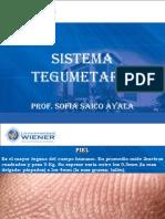 Clase 9-2012-I Sistema Tegumentario