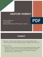 Anatomi Rambut