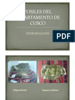 Fosiles Del Cusco