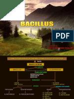 Bacillus 2010