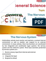 31(A) the Nervous System