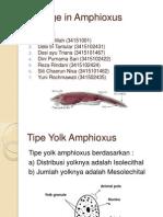 amphioxus 2003