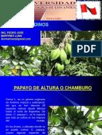 Cultivos Andinos Clase 17 Papaya de Altura