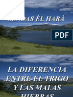52 La Diferencia Entre El Trigo y Las Malas Hierbas