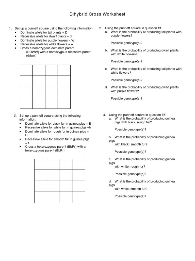 dihybrid cross worksheet answers lesupercoin printables worksheets. Black Bedroom Furniture Sets. Home Design Ideas