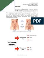 Contenido 3.1.1. Anatomia Sistema Renal