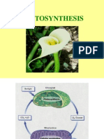 Photosynthesis.bio