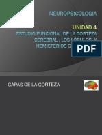 (11) Corteza, lóbulo y hemisferios, estudios funcional