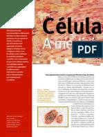 celulas tronco