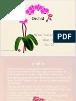 orchid descriptive