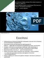 (s6ita - bi4ita) Presentazione - Juliette MONTAIGU - Endocitosi