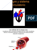 Sangre+y+Sistema+Circulatorio+101019