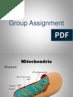 Mitochondria & Endoplasmic Reticulum