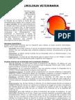 Generalidades en Oftalmología Veterinaria (1)