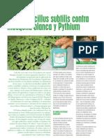 Bacillus Subtilis Contra Mosca Blanca y Phytium