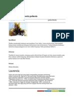 Penbahasan Rhodymenia Palmata
