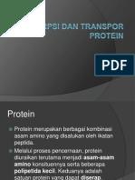 ppt absorpsi dan transportasi protein kelompok 3