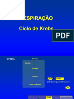 CiclodeKrebs