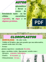 FOTOSINTESIS_2