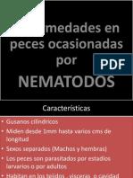ENFERMEDADES POR NEMATODOS EN PECES