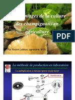 Avantages Culture Champis Agriculture