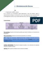 Resumen - Determinación  y Diferenciación Sexual
