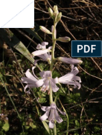 Allelopathic  potential of  Notholirion  thomsonianum  (D.Don) stapf