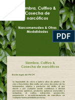Siembra, Cultivo & Cosecha de narcóticos