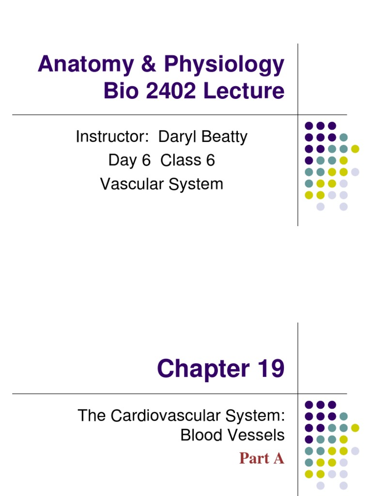 6 AP 2 Lecture 6 Ch 19 Vascular System | Capillary | Artery